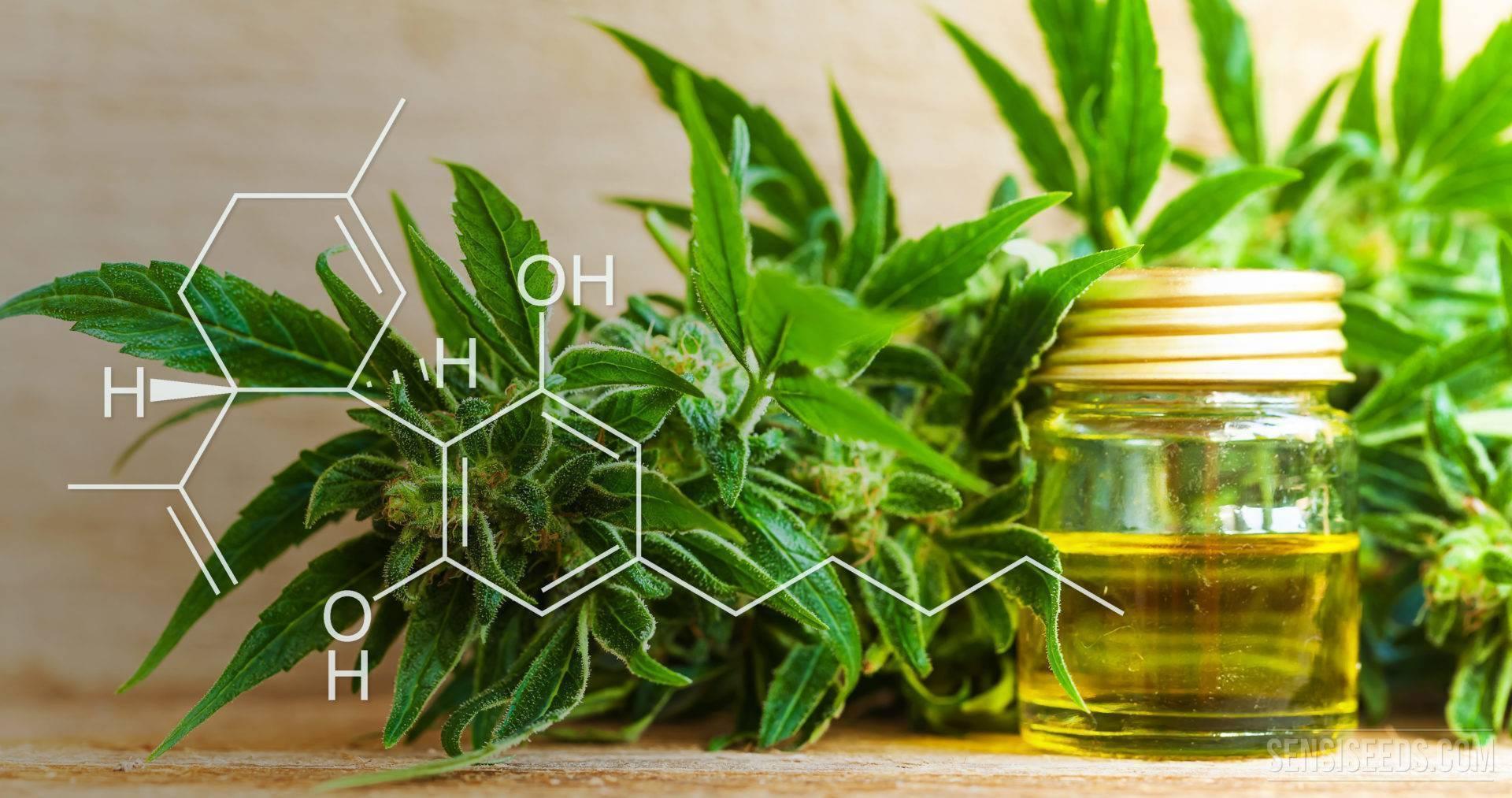 Wirkung und Bestandteile von CBD Öl