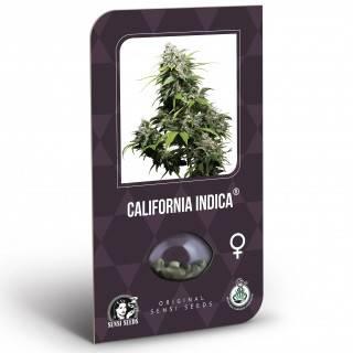 California Indica Feminisiert (Classic Redux Serie)