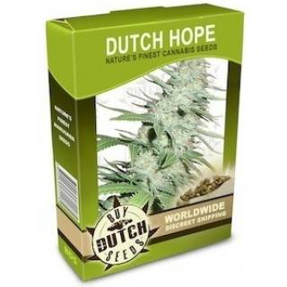 Dutch Hope
