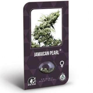 Jamaican Pearl Feminisiert (Classic Redux Serie)