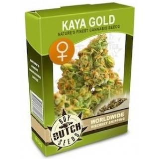 Kaya Gold Feminisiert