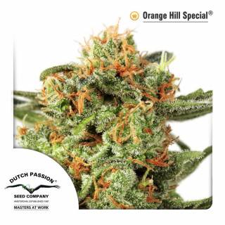 Orange Hill Special Feminisiert