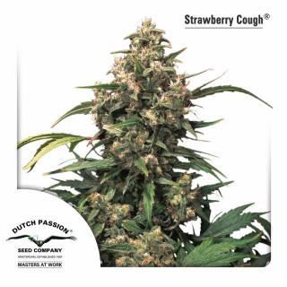 Strawberry Cough Feminisiert